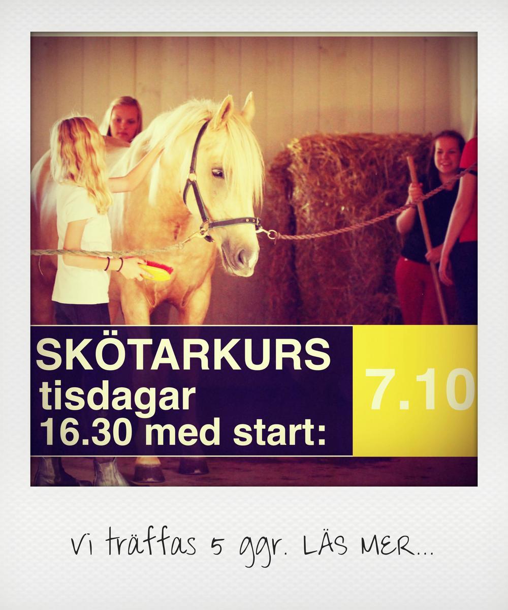Hästskötsel skötarkurs häststall ridskola Vasa Korsholm.jpg