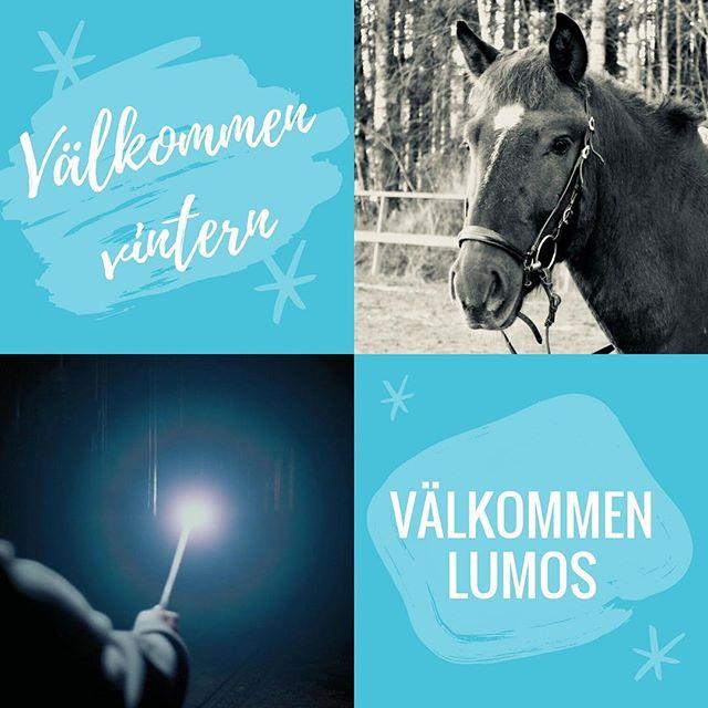 Välkommen Lumos till oss 🐎❤️ Vintern är äntligen här ❄️🌨☀️ och ridskolans nya häst Lumos stortrivs i flocken. Ni som läser Harry Potter förstår hur vår nya vän fått sitt namn... Hösten har varit fin med många ivriga ryttare och vi är glada över att så många nya elever har hittat till oss. Välkomna både nya och gamla med i gemenskapen ❤️ Hösten har också fört med sig avsked då ponnyn Brenda nu lever sköna och lugna pensionärsdagar (tack Anna @blopblipblop ) och vår trotjänare Arnold får nu galoppera på de evigt gröna ängarna.  Ha det bra. Vi ses vid stallet 🤗😀 #🐎Lumos #🐎Brenda #🐎Arnold #HarryPotter #vinteristallet #nyistallet