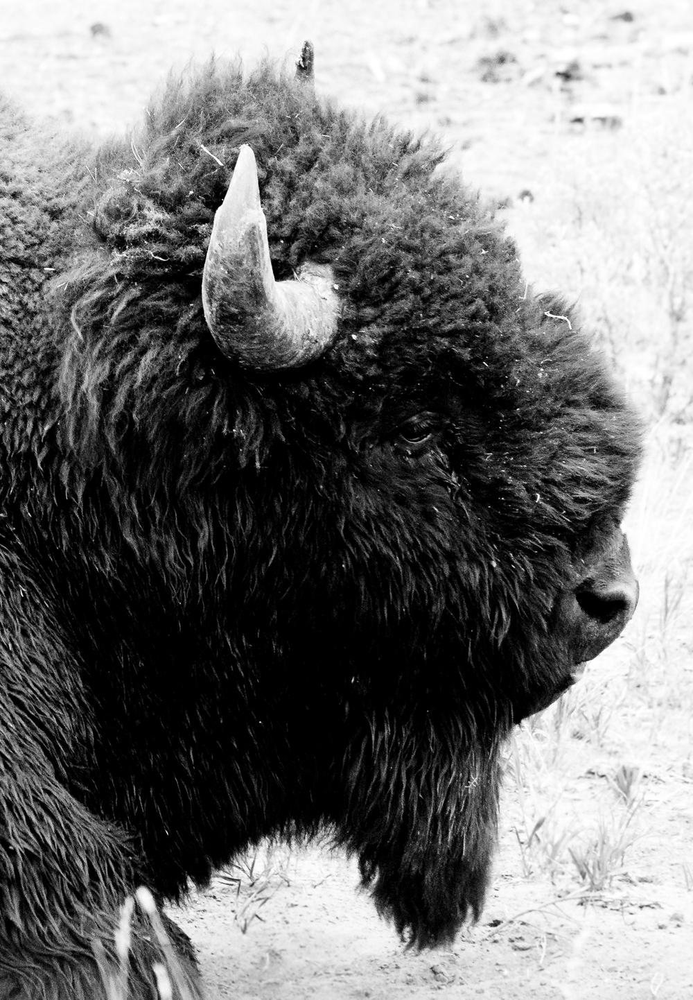 Yellowstone (18)