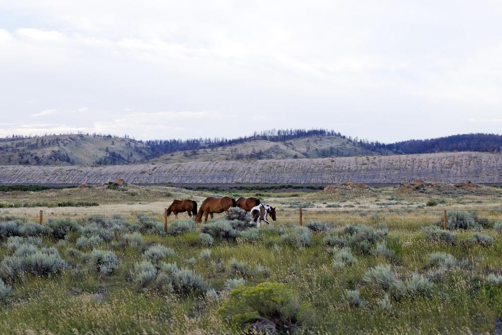 Yellowstone (2)