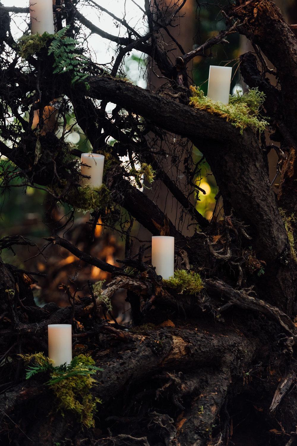 Nicola_Reiersen_Photography_Sea_Cider_Forest_Wedding (51).jpg