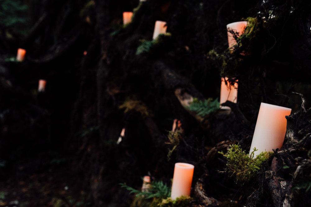 Nicola_Reiersen_Photography_Sea_Cider_Forest_Wedding (107).jpg