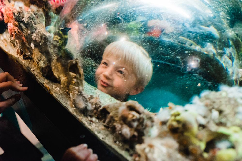 Nicola_Reiersen_Photography_Victoria_BC_Aquarium_Maternity_Session (59).jpg