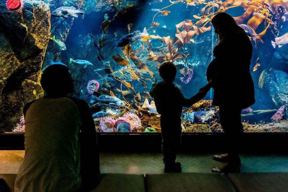 Nicola_Reiersen_Photography_Victoria_BC_Aquarium_Maternity_Session (99).jpg
