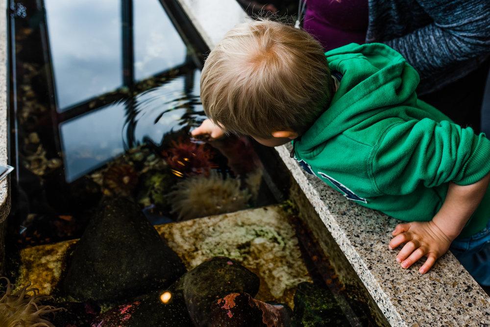 Nicola_Reiersen_Photography_Victoria_BC_Aquarium_Maternity_Session (137).jpg