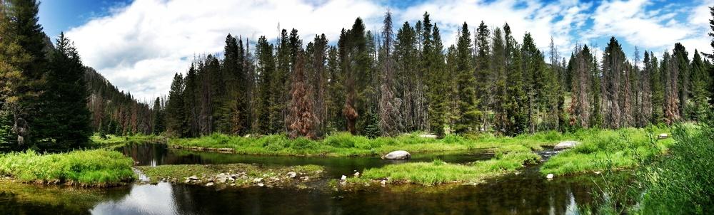 Montana_flyfish.jpg