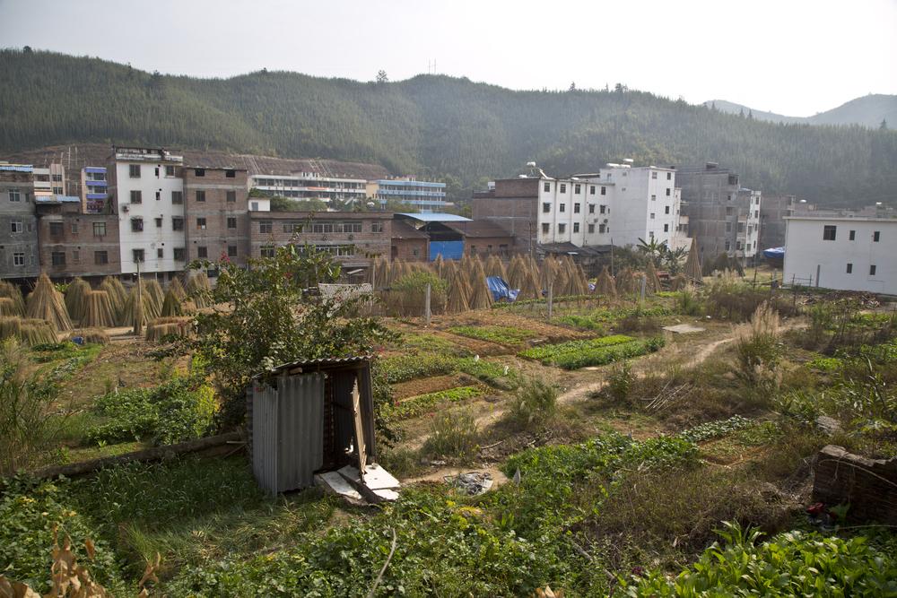 aozi_bamboo_farm.jpg