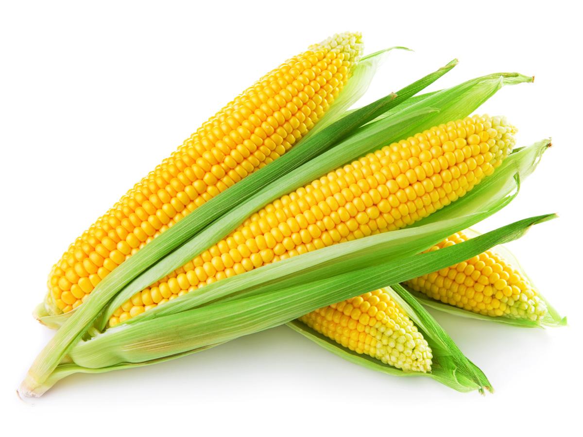 Corn is Making a Comeback