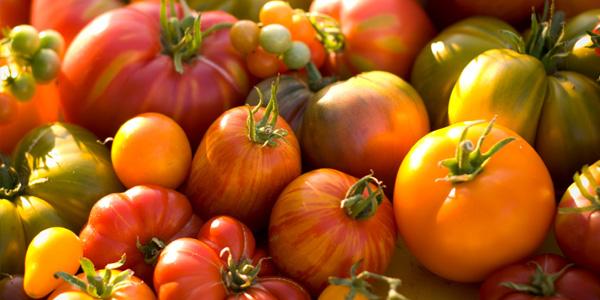 It's Tomato Time!