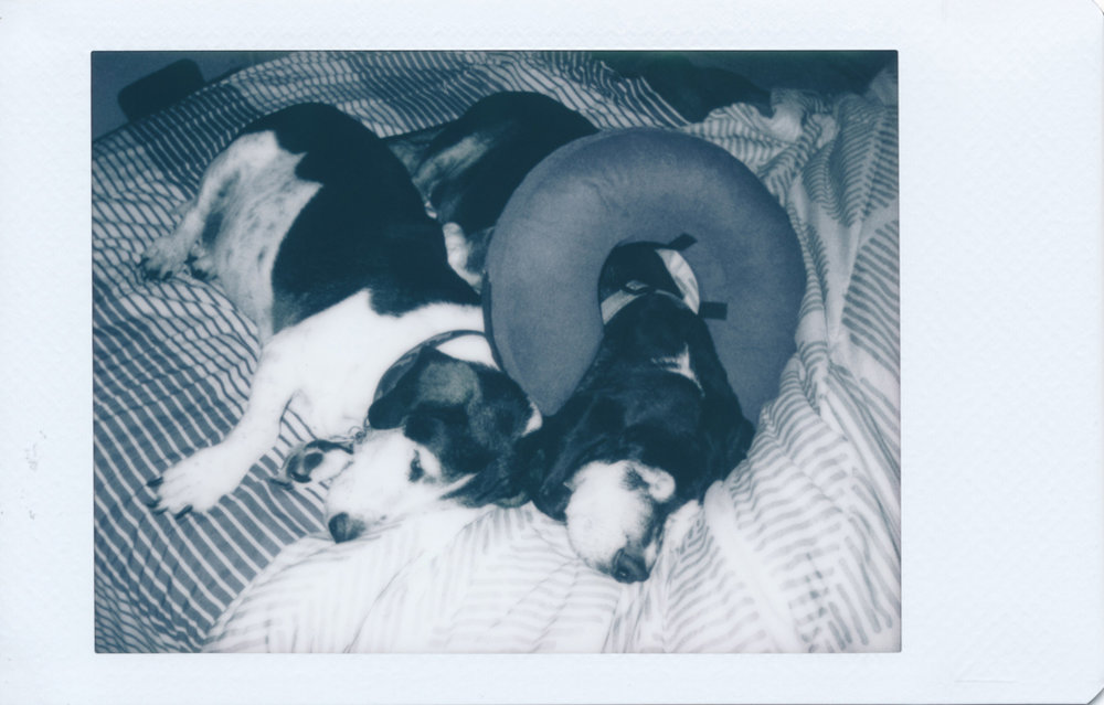 Tired pups. Shot in near darkness with the built-in flash turned on.