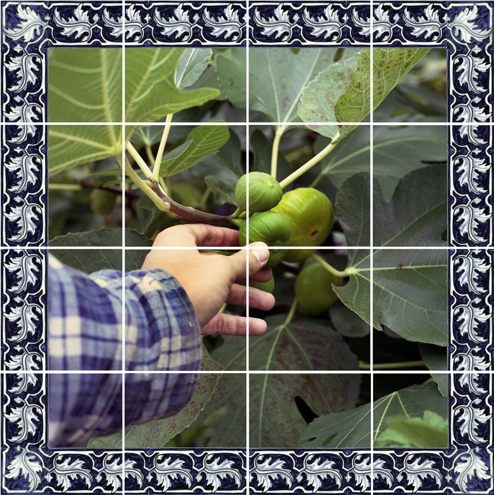 Azulejos #1 (Figs), 2007