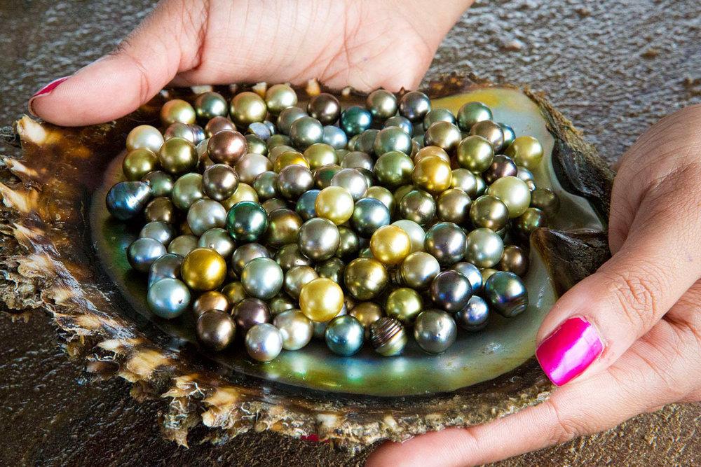 Civas Pearl Harvest