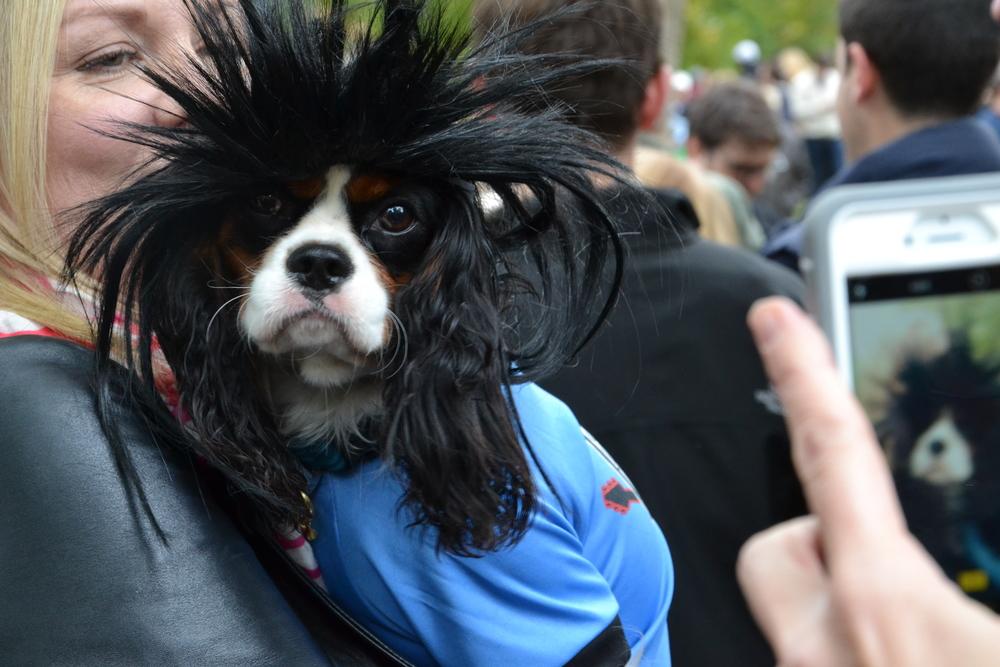 Halloween Dog Parade_0005.JPG