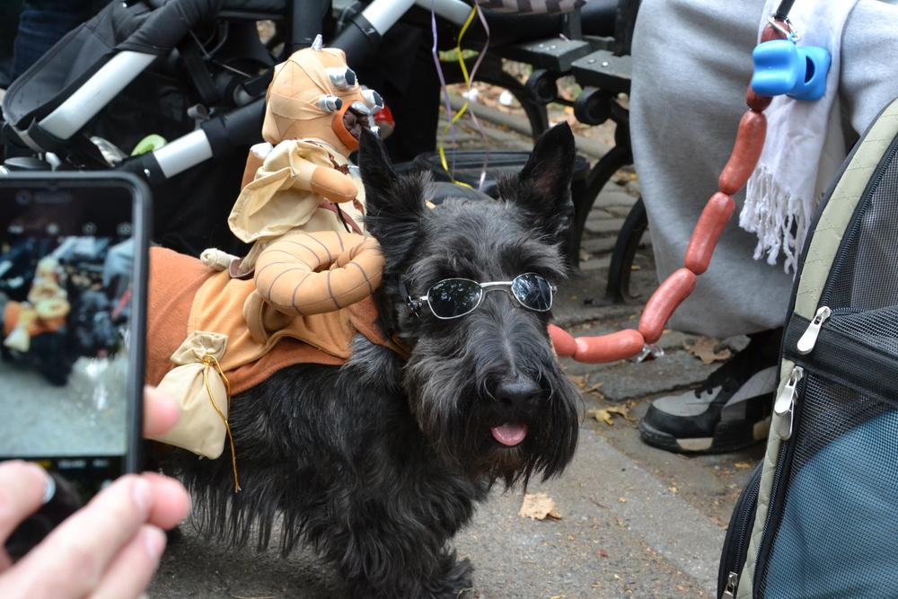 Halloween Dog Parade_0040.JPG