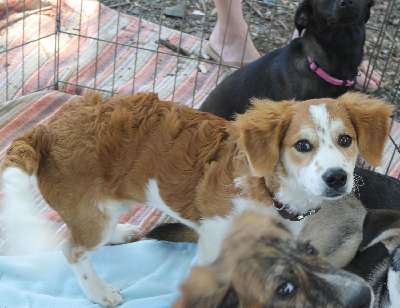 Adopt — Greater Charlotte SPCA