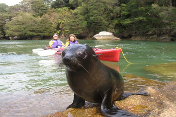 Couple enjoying Stewart Island wildlife.