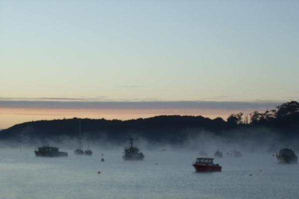Copy of Misty morning on Stewart Island, New Zealand.