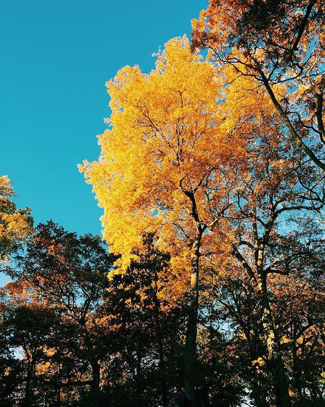 Fall flexing 🍂💫 . . . #fall #autumn #boston #igernewengland #arnoldarboretum