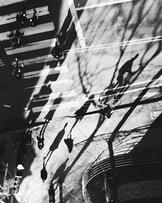 Winter's shadows 🖤