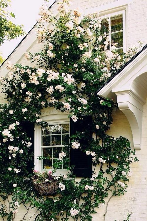 found on: lust-moonlight.tumblr.com