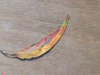 gum leaf 9.jpg