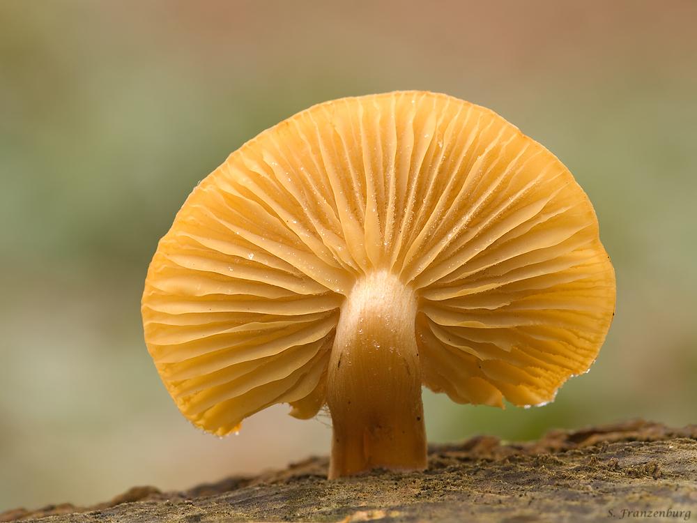 Mushroom_sun.jpg
