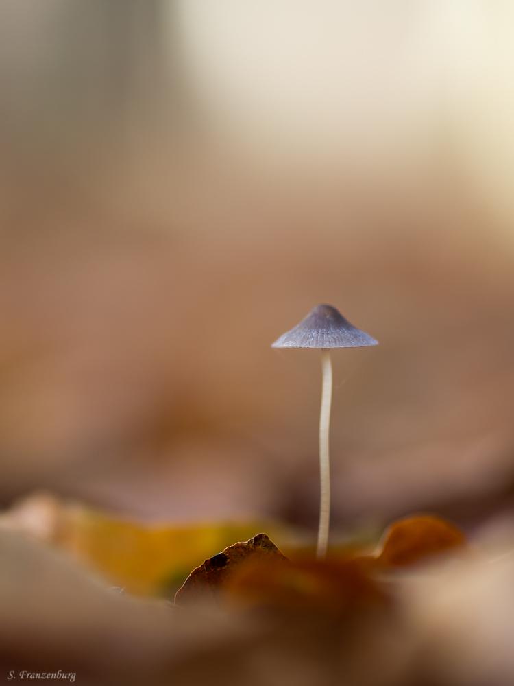 Mushroom-dark.jpg