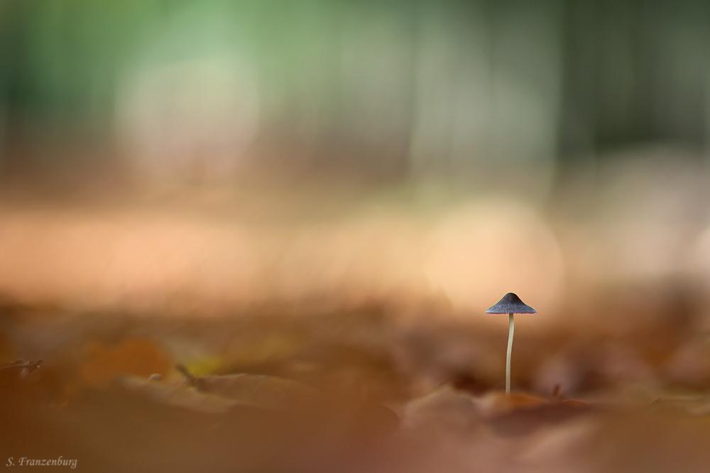 Mushroom-forest.jpg