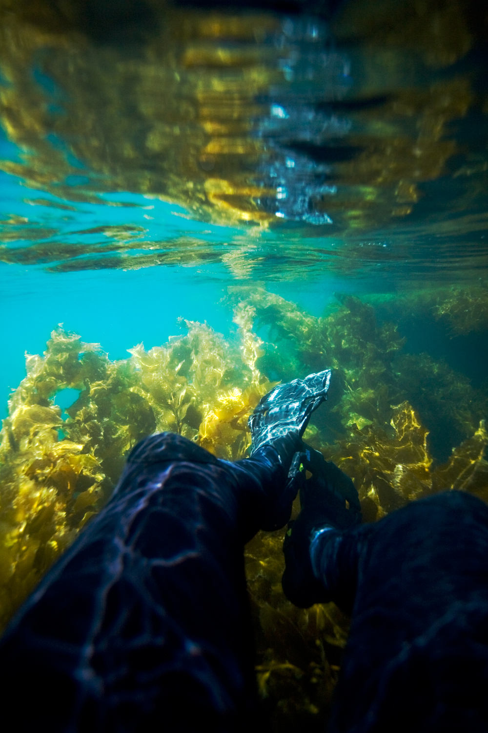 Legs_ofa_Freediver_over_Kelp.jpg