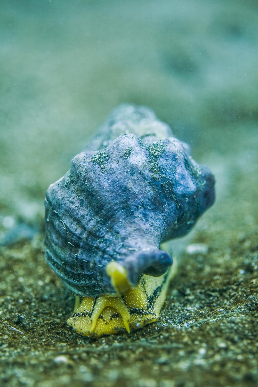 Underwater_Snail_Helix_pomatia.jpg