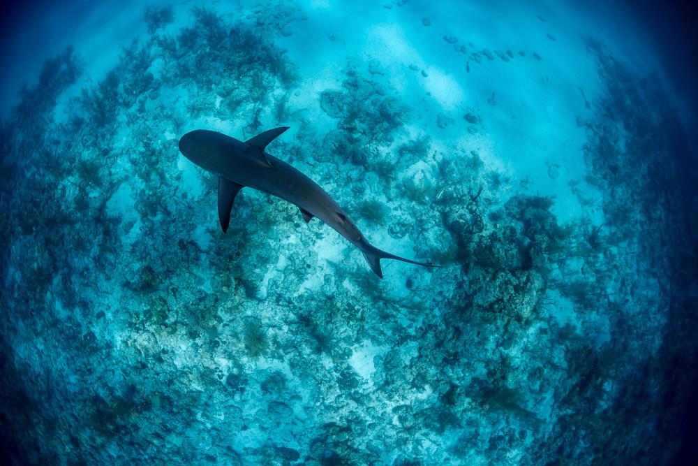 Bahamas_0008-Edit.jpg