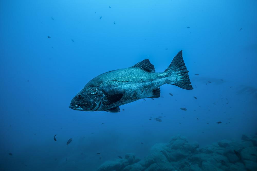 underwater_0009.jpg