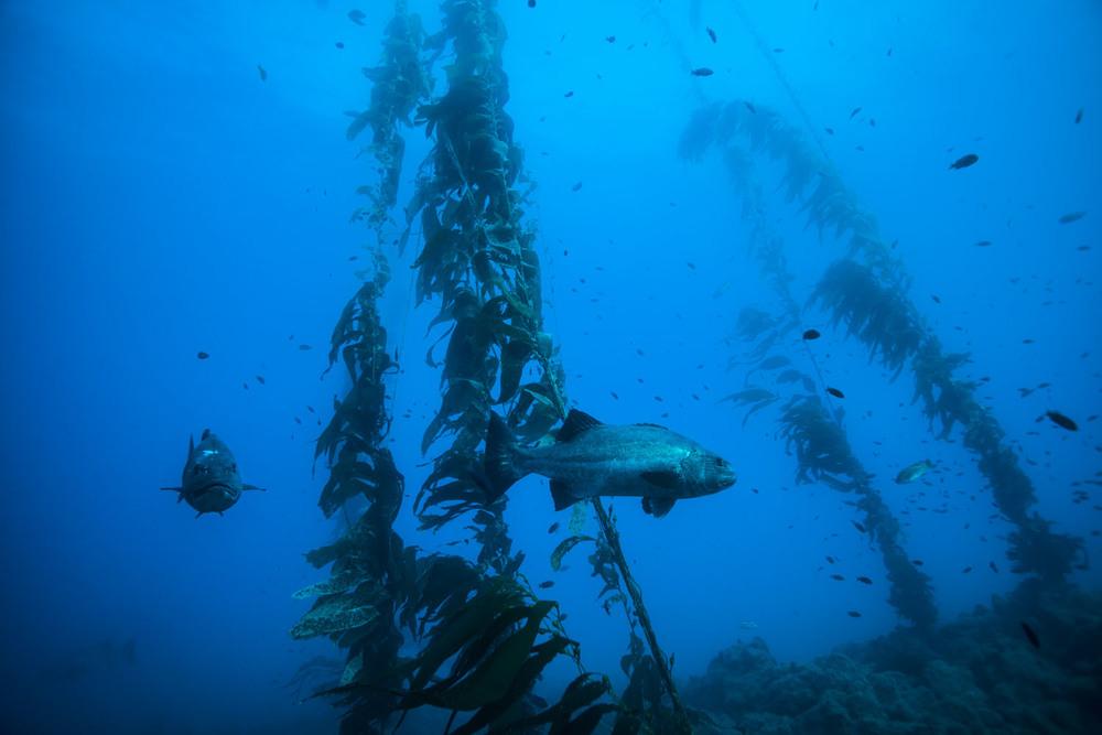underwater_0010.jpg