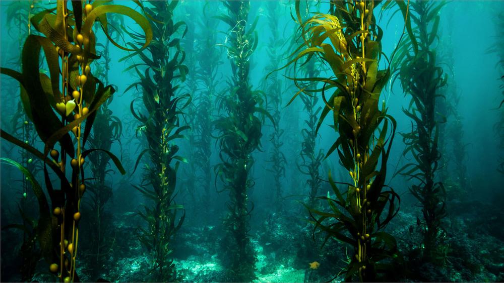 underwater_0014.jpg