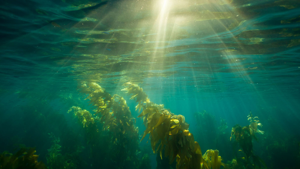 underwater_0016.jpg