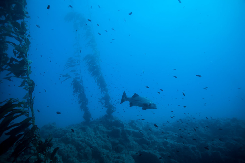 underwater_0028.jpg