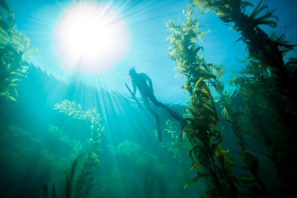 underwater_0029.jpg