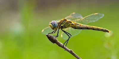 dragonflies_F.jpg