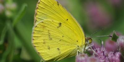 butterfly_f.jpg