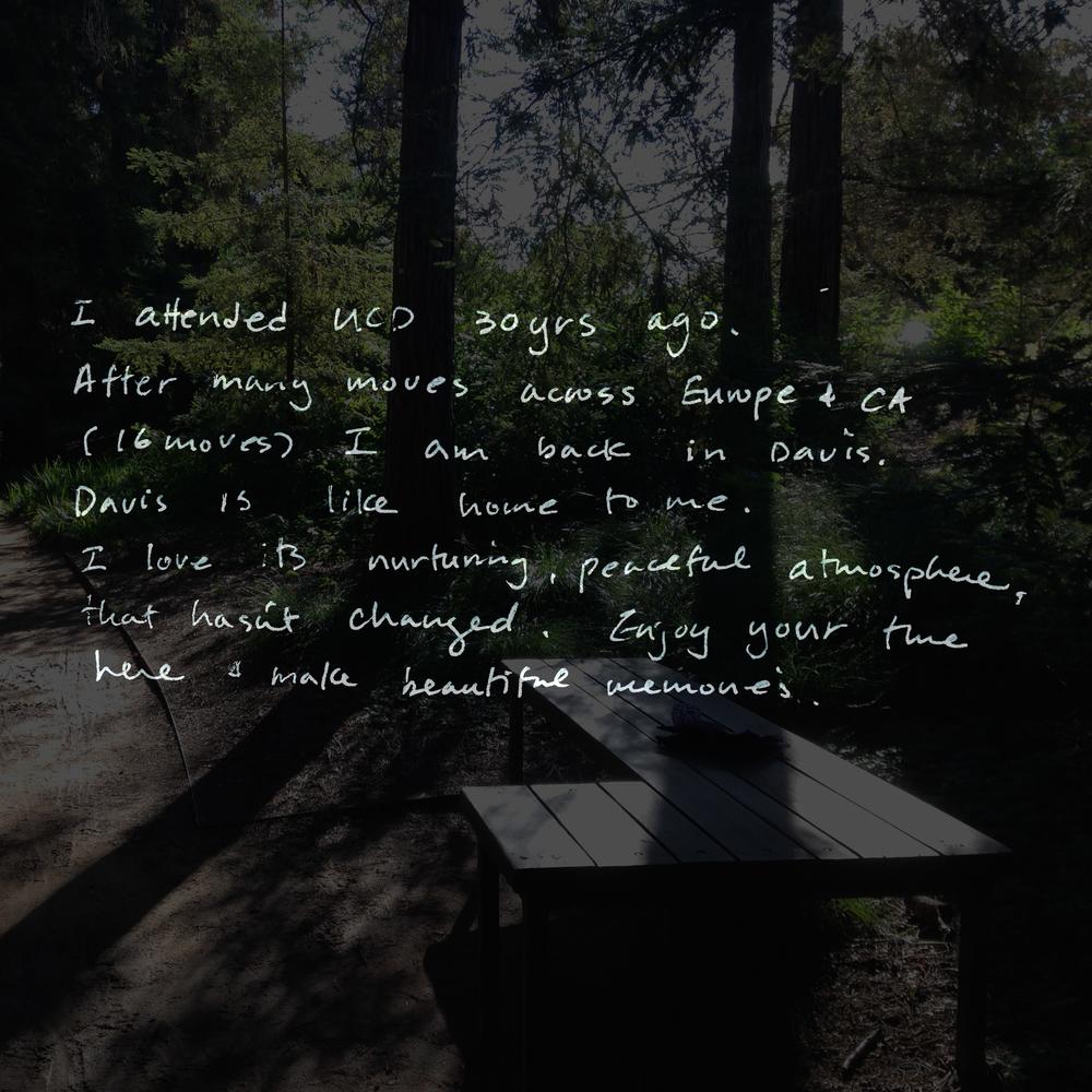 redwood 9.jpg