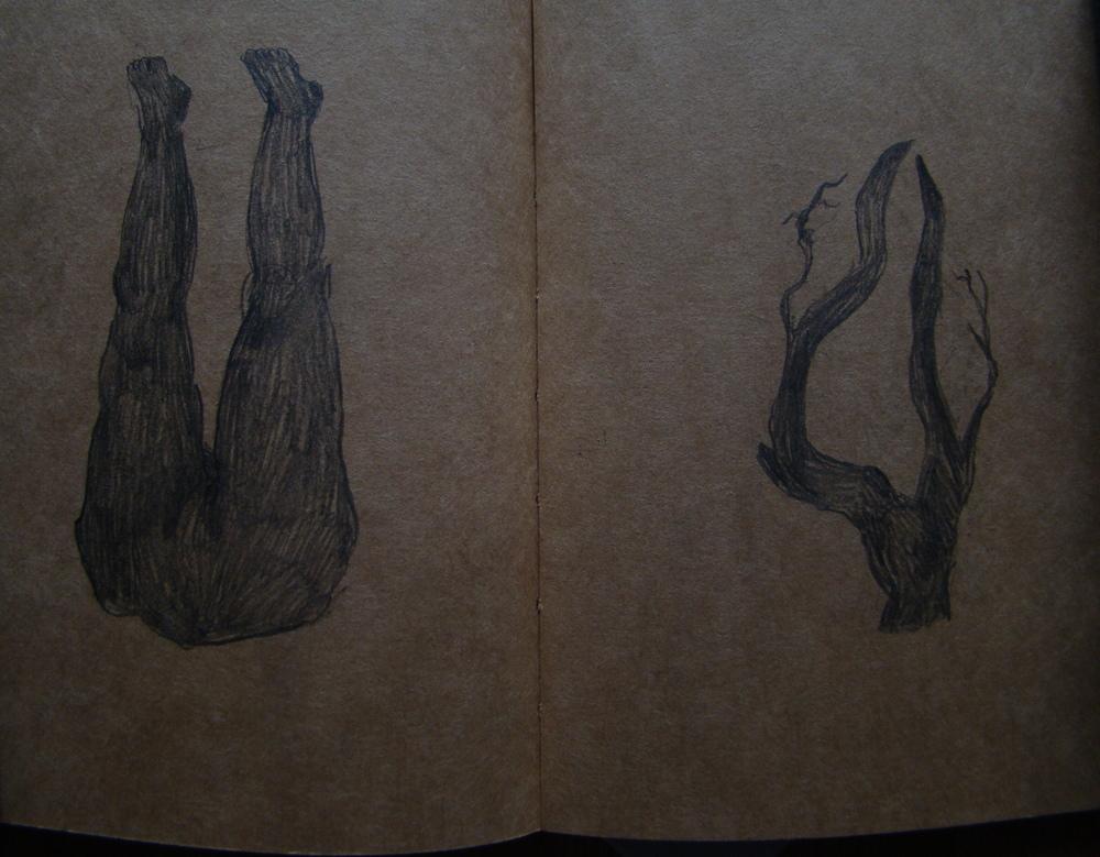 limbs.