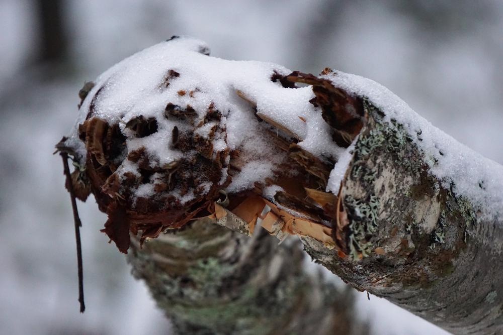 Lapland6