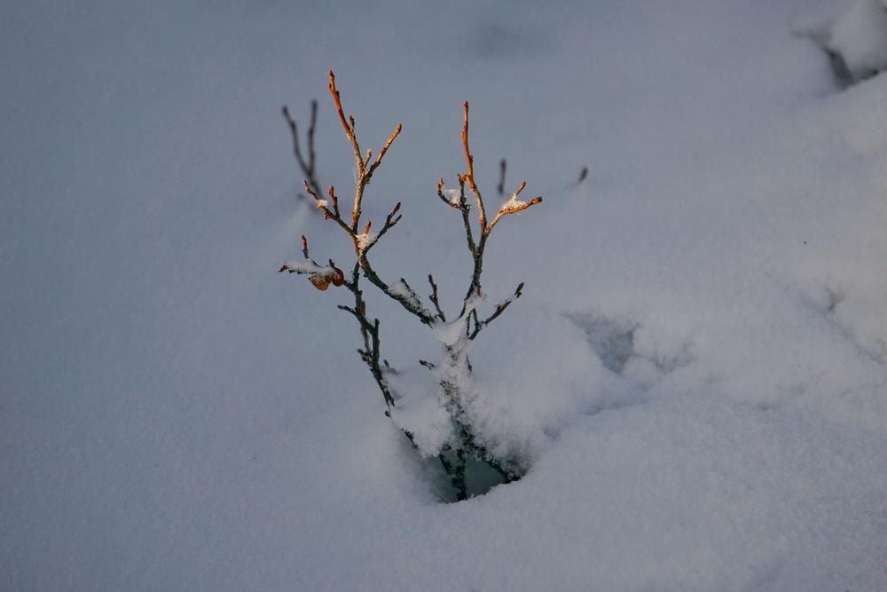 Lapland8