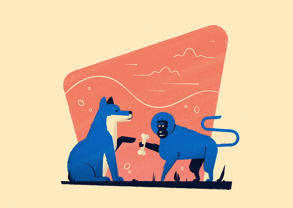 Above /  New Scientist -  Monkeys' cosy alliance with wolves looks like domestication   Page Header /  The Guardian -  Calvin Klein fragrance could be used to lure killer tiger