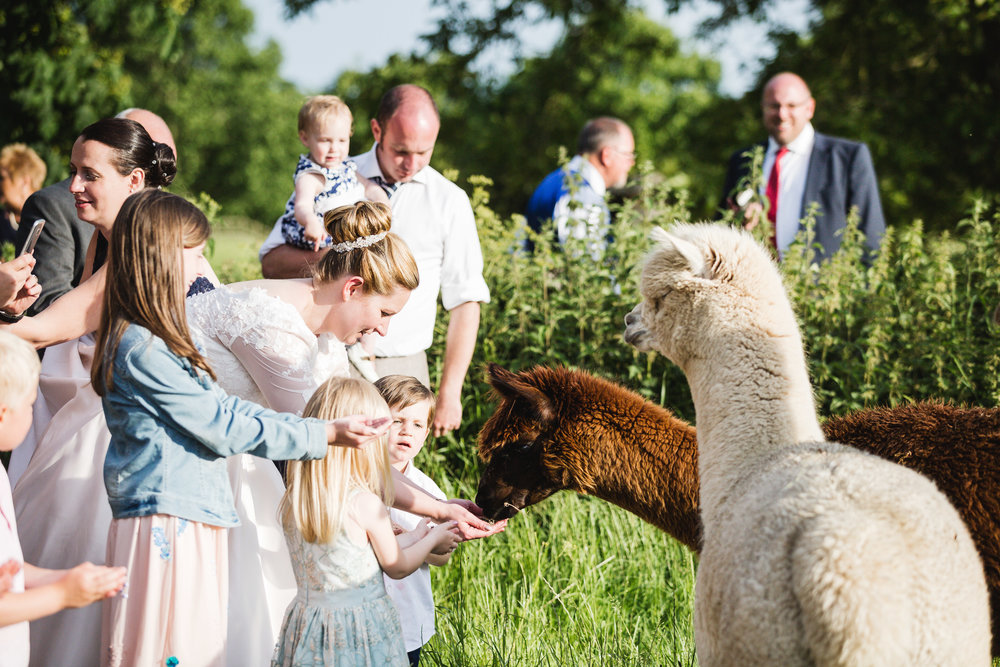 Essex Wedding Photographer Alpaca