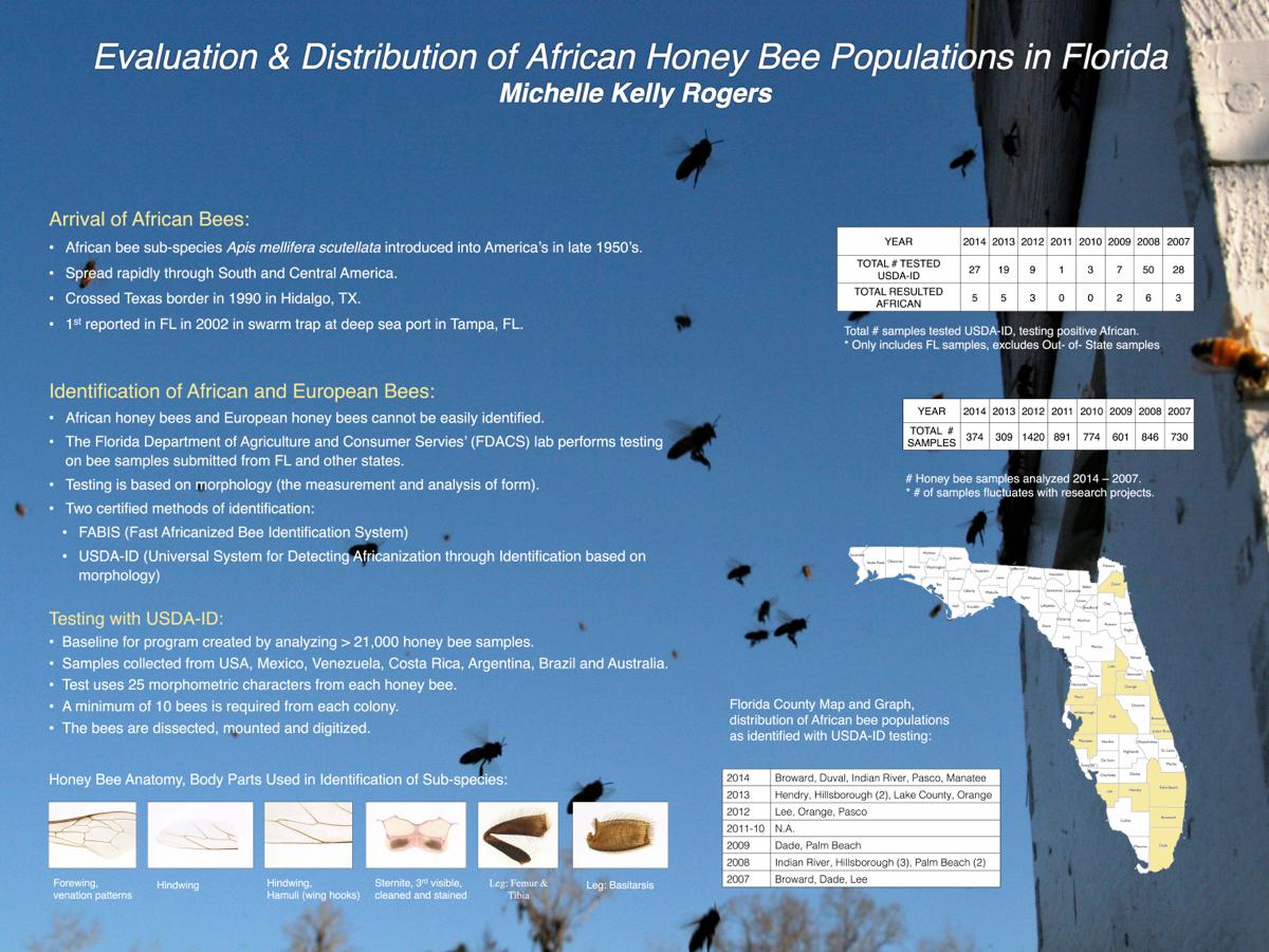 Honey Bee Anatomy Identification Of Sub Species Beeology
