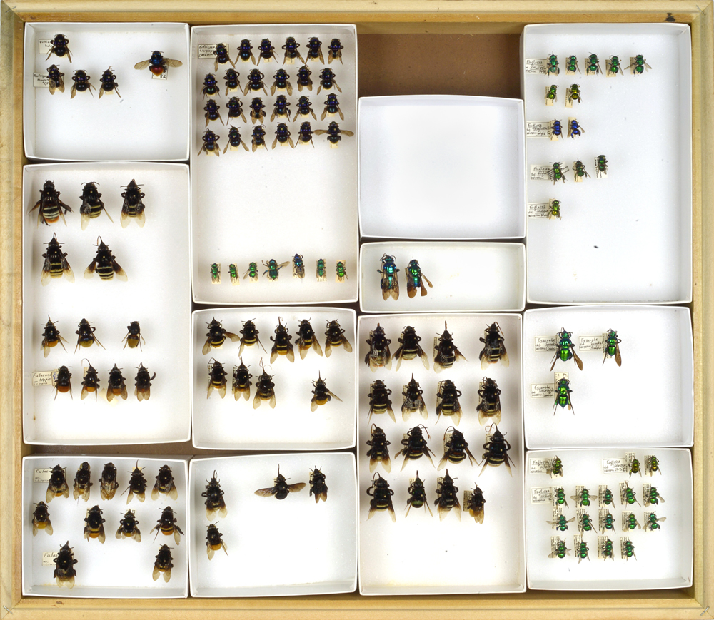 Bee Collection, Variety