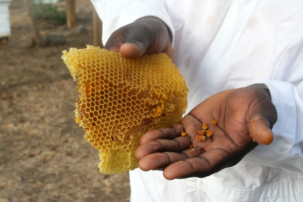 Grenada hand pollen.jpg