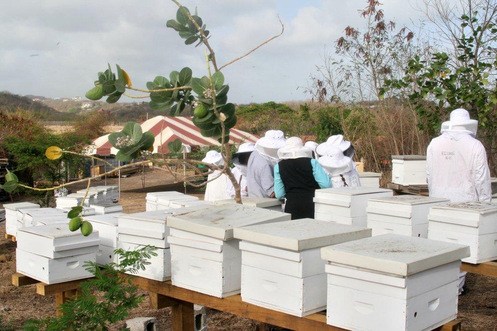 Grenada Hives people tree.jpg