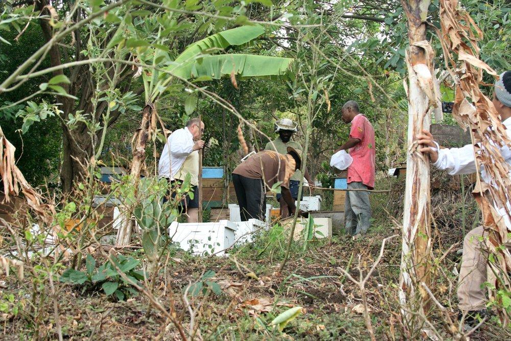 Grenada hives conner dwayne beekeeper.jpg